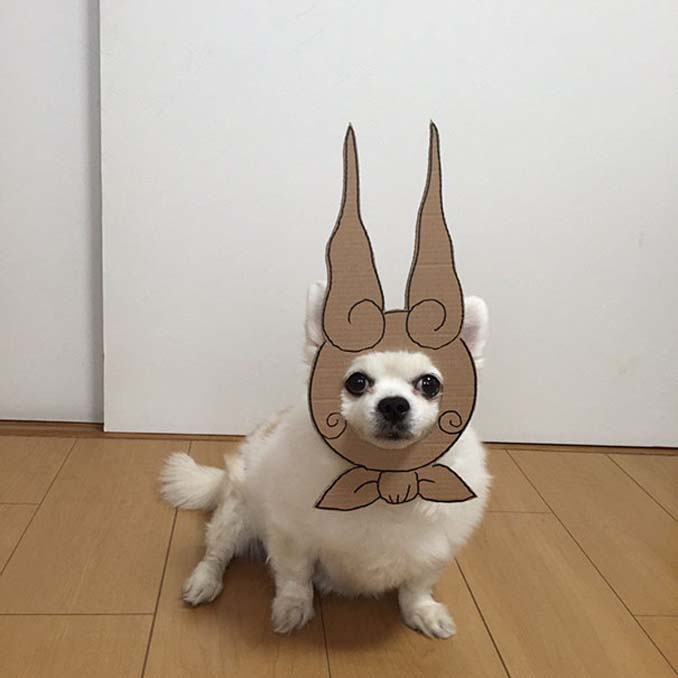 Γιαπωνέζα δημιουργεί ξεκαρδιστικά σχέδια από χαρτόνι για τον σκύλο της (17)