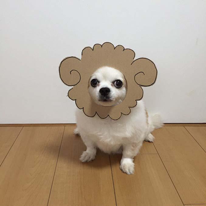 Γιαπωνέζα δημιουργεί ξεκαρδιστικά σχέδια από χαρτόνι για τον σκύλο της (19)