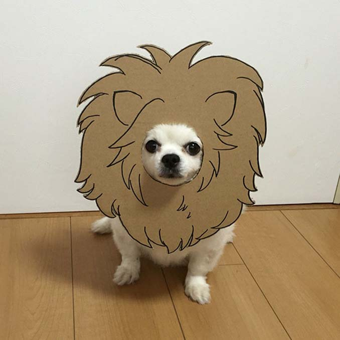 Γιαπωνέζα δημιουργεί ξεκαρδιστικά σχέδια από χαρτόνι για τον σκύλο της (20)