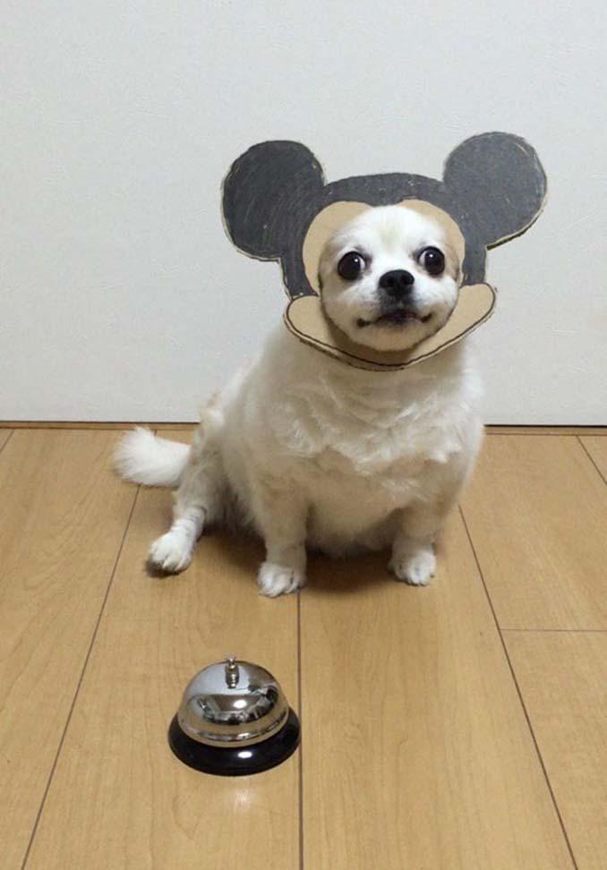 Γιαπωνέζα δημιουργεί ξεκαρδιστικά σχέδια από χαρτόνι για τον σκύλο της (21)
