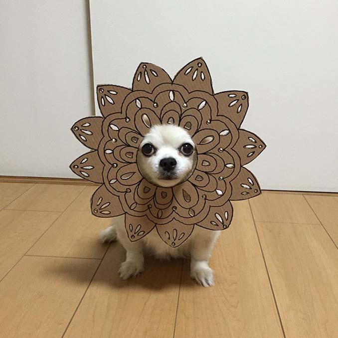 Γιαπωνέζα δημιουργεί ξεκαρδιστικά σχέδια από χαρτόνι για τον σκύλο της (22)