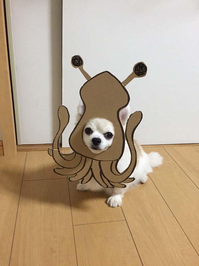 Γιαπωνέζα δημιουργεί ξεκαρδιστικά σχέδια από χαρτόνι για τον σκύλο της (23)