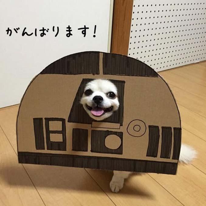 Γιαπωνέζα δημιουργεί ξεκαρδιστικά σχέδια από χαρτόνι για τον σκύλο της (25)