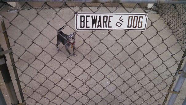 Όταν οι πινακίδες «Προσοχή σκύλος» αποκτούν κωμική διάσταση (1)