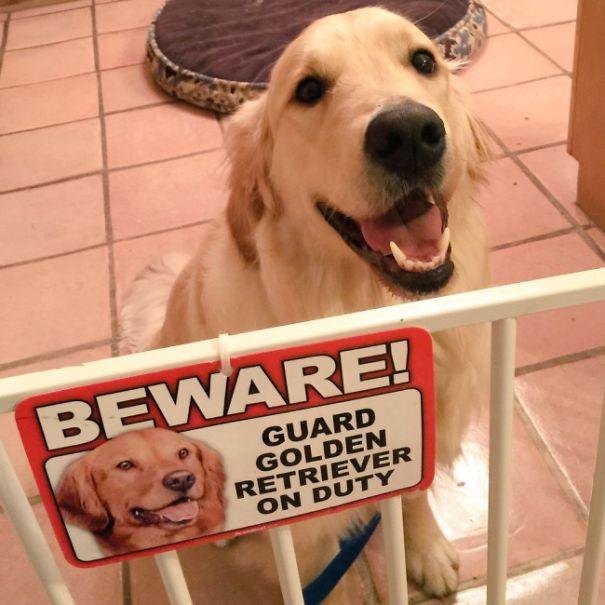 Όταν οι πινακίδες «Προσοχή σκύλος» αποκτούν κωμική διάσταση (3)