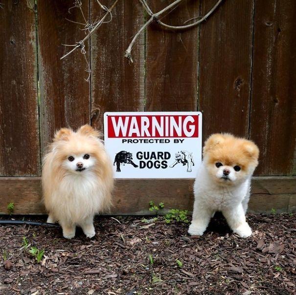 Όταν οι πινακίδες «Προσοχή σκύλος» αποκτούν κωμική διάσταση (4)