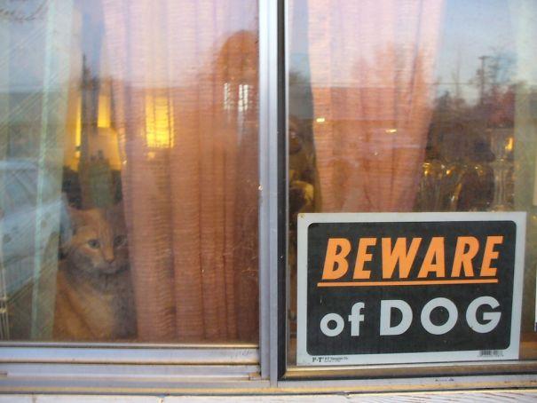 Όταν οι πινακίδες «Προσοχή σκύλος» αποκτούν κωμική διάσταση (5)