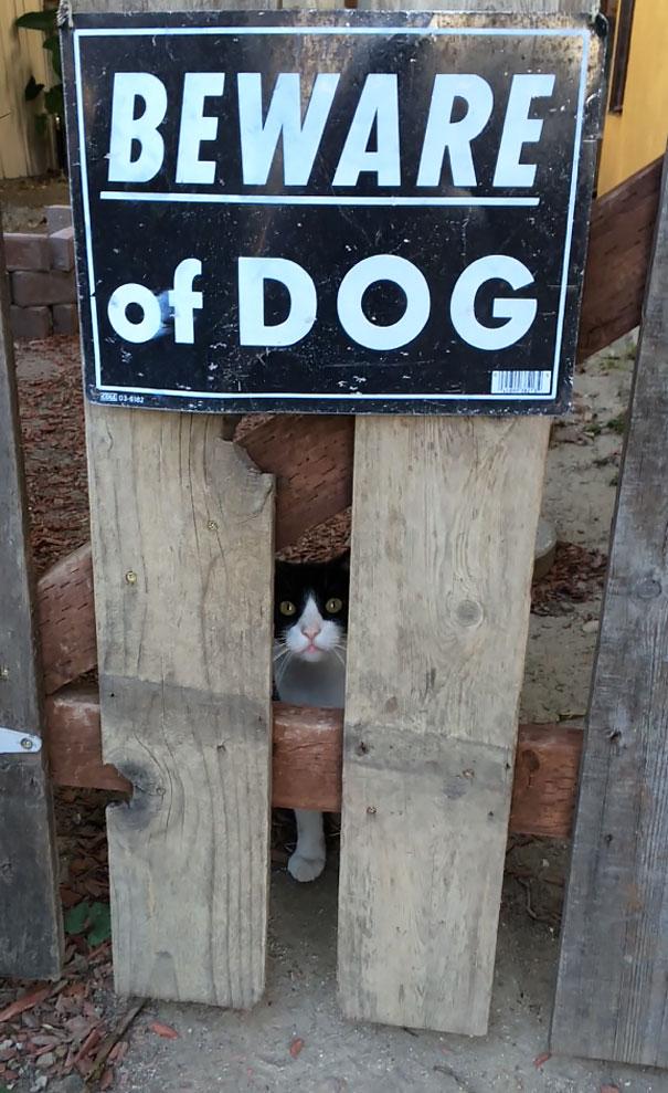 Όταν οι πινακίδες «Προσοχή σκύλος» αποκτούν κωμική διάσταση (7)