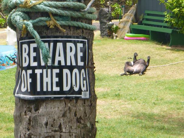 Όταν οι πινακίδες «Προσοχή σκύλος» αποκτούν κωμική διάσταση (11)