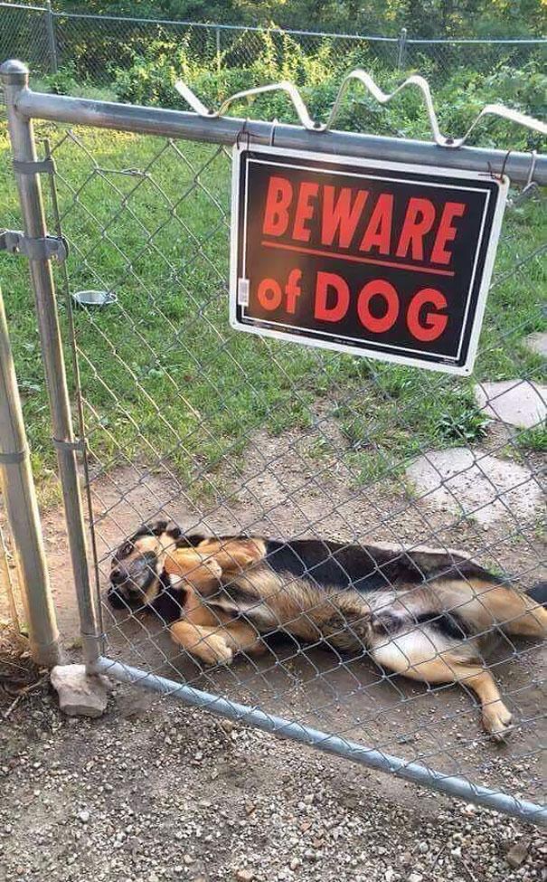 Όταν οι πινακίδες «Προσοχή σκύλος» αποκτούν κωμική διάσταση (13)