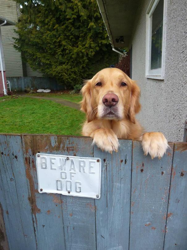 Όταν οι πινακίδες «Προσοχή σκύλος» αποκτούν κωμική διάσταση (15)