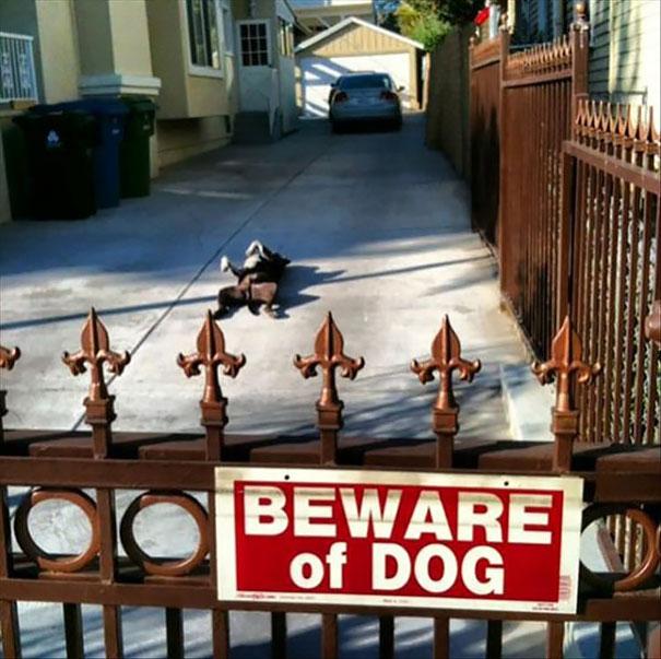 Όταν οι πινακίδες «Προσοχή σκύλος» αποκτούν κωμική διάσταση (16)