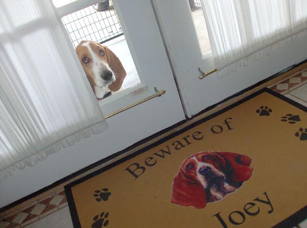Όταν οι πινακίδες «Προσοχή σκύλος» αποκτούν κωμική διάσταση (17)
