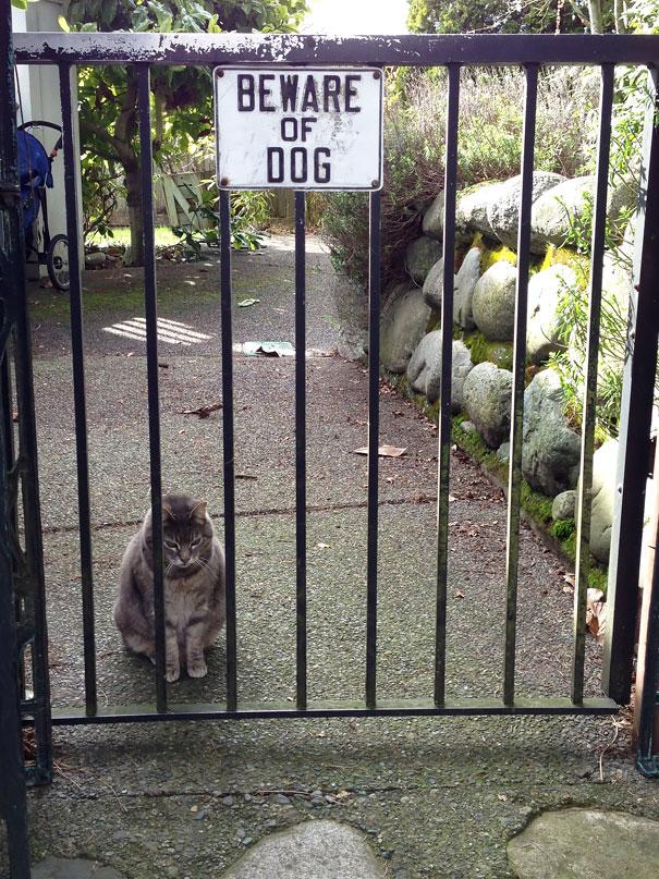 Όταν οι πινακίδες «Προσοχή σκύλος» αποκτούν κωμική διάσταση (19)