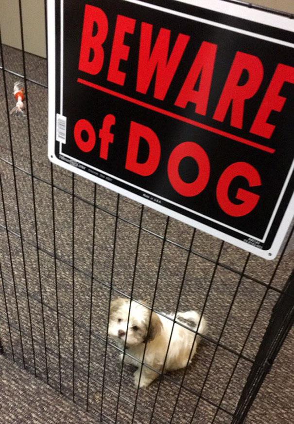 Όταν οι πινακίδες «Προσοχή σκύλος» αποκτούν κωμική διάσταση (20)