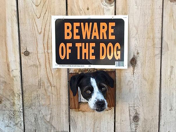Όταν οι πινακίδες «Προσοχή σκύλος» αποκτούν κωμική διάσταση (22)
