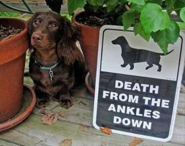 Όταν οι πινακίδες «Προσοχή σκύλος» αποκτούν κωμική διάσταση (24)