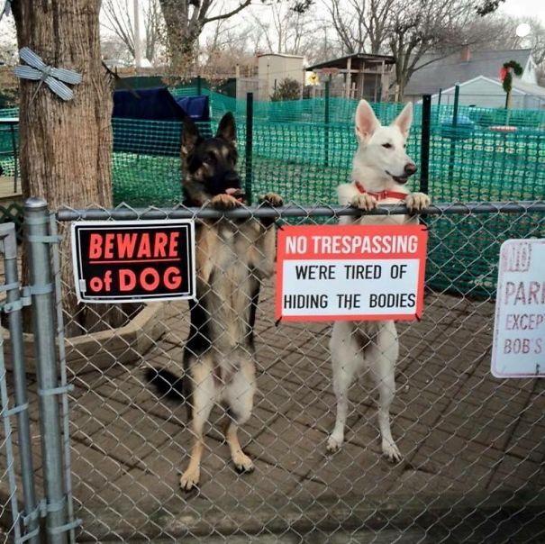 Όταν οι πινακίδες «Προσοχή σκύλος» αποκτούν κωμική διάσταση (26)