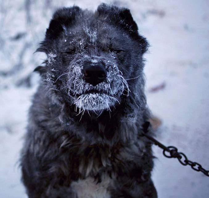 Παγωμένο χωριό στη Σιβηρία (5)