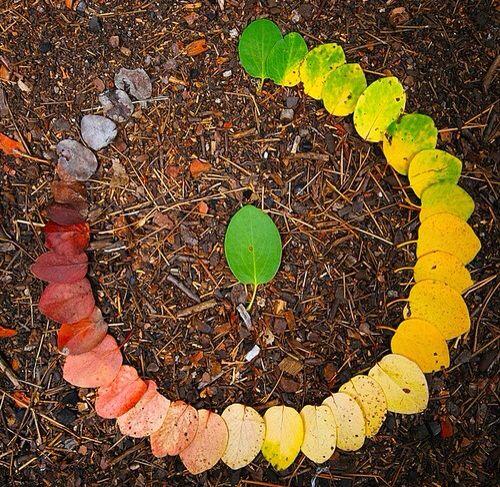 Ο κύκλος ζωής ενός φύλλου   Φωτογραφία της ημέρας