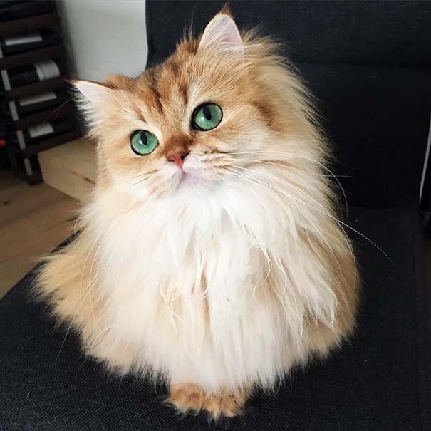 25+ από τις πιο όμορφες γάτες στον κόσμο (2)