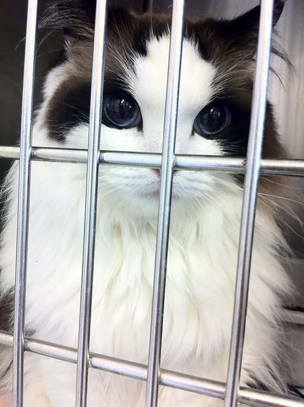 25+ από τις πιο όμορφες γάτες στον κόσμο (3)