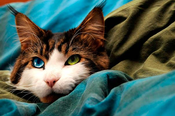25+ από τις πιο όμορφες γάτες στον κόσμο (4)