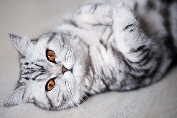 25+ από τις πιο όμορφες γάτες στον κόσμο (5)