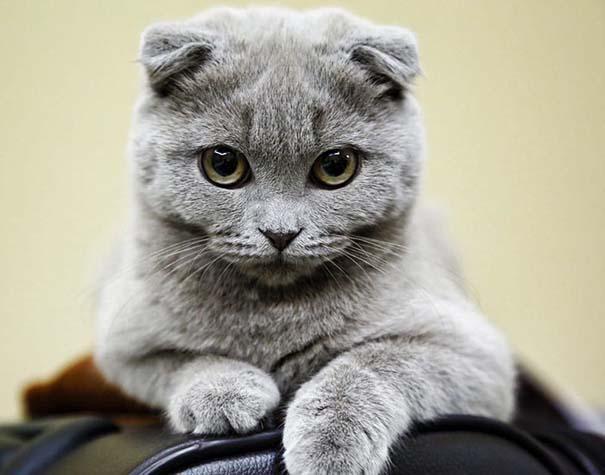 25+ από τις πιο όμορφες γάτες στον κόσμο (6)