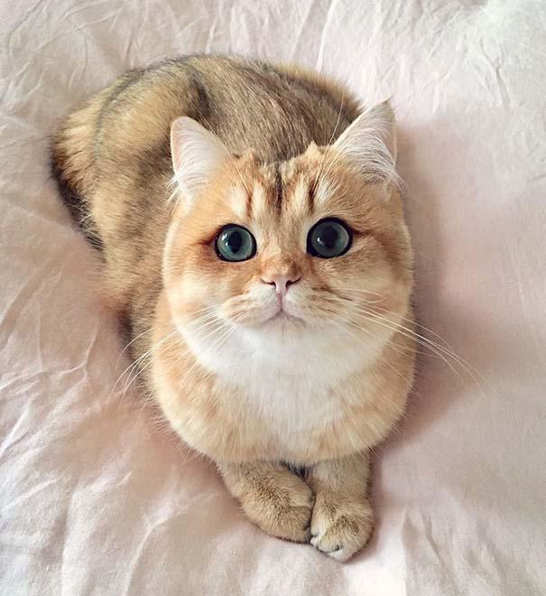 25+ από τις πιο όμορφες γάτες στον κόσμο (8)