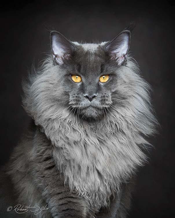 25+ από τις πιο όμορφες γάτες στον κόσμο (9)