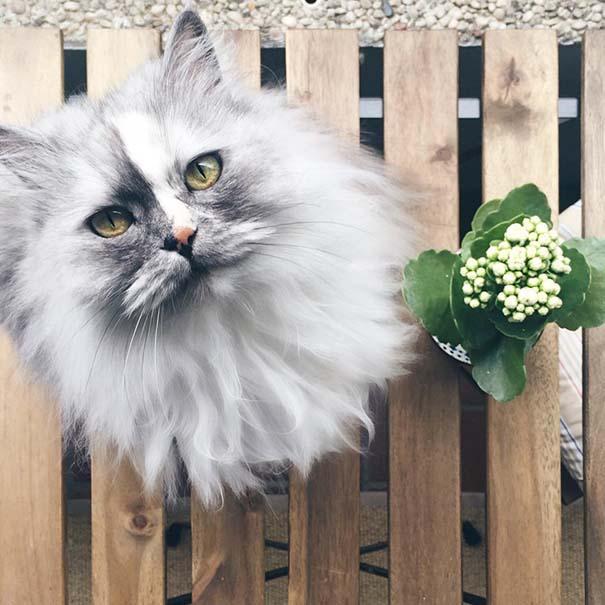 25+ από τις πιο όμορφες γάτες στον κόσμο (10)