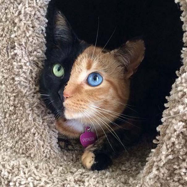 25+ από τις πιο όμορφες γάτες στον κόσμο (11)