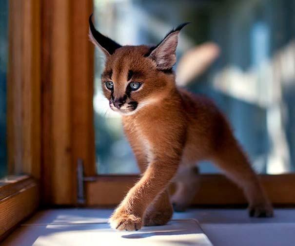 25+ από τις πιο όμορφες γάτες στον κόσμο (12)
