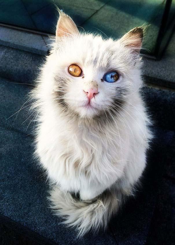 25+ από τις πιο όμορφες γάτες στον κόσμο (13)