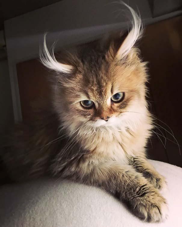 25+ από τις πιο όμορφες γάτες στον κόσμο (15)