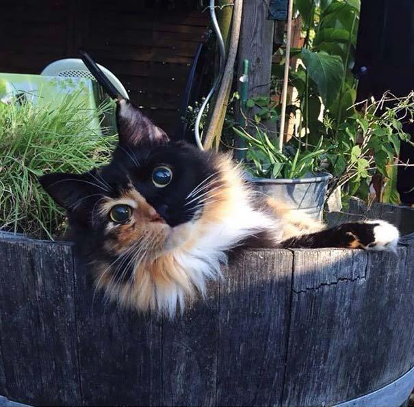 25+ από τις πιο όμορφες γάτες στον κόσμο (16)