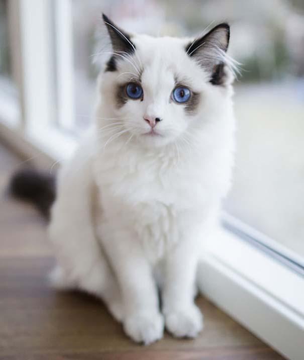 25+ από τις πιο όμορφες γάτες στον κόσμο (18)