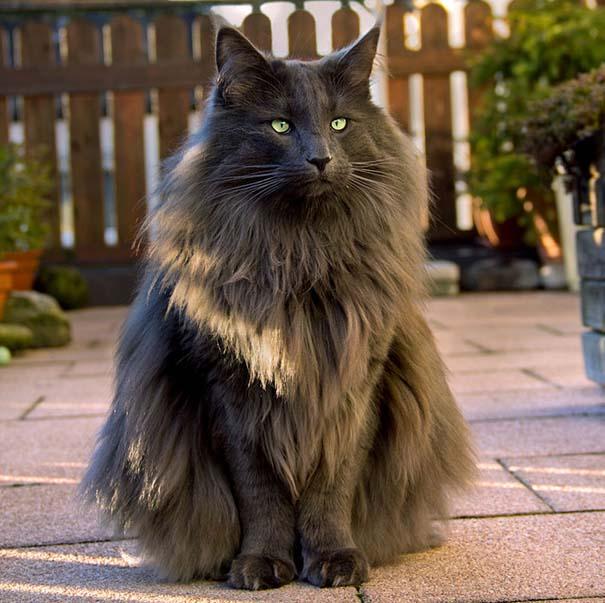 25+ από τις πιο όμορφες γάτες στον κόσμο (19)