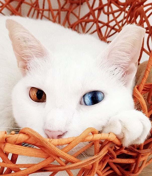 25+ από τις πιο όμορφες γάτες στον κόσμο (21)