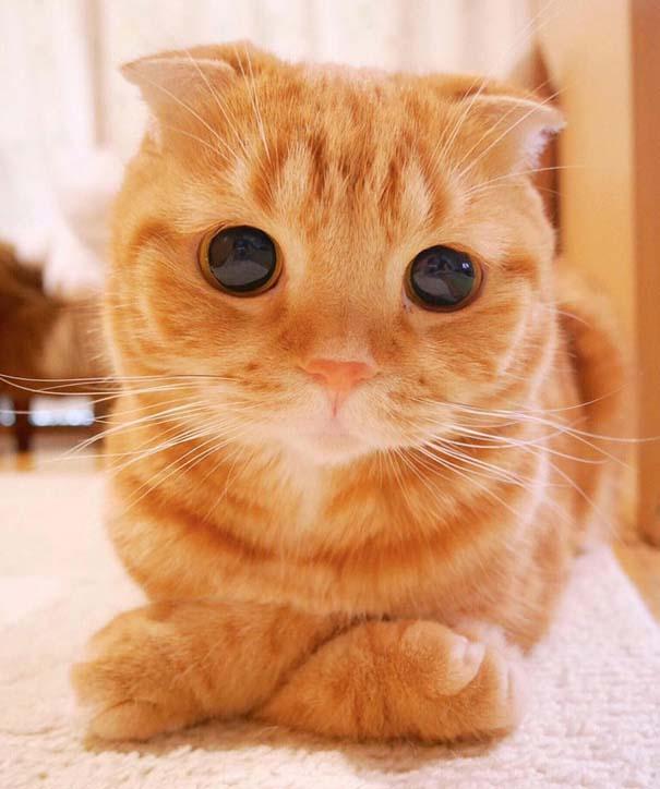 25+ από τις πιο όμορφες γάτες στον κόσμο (22)