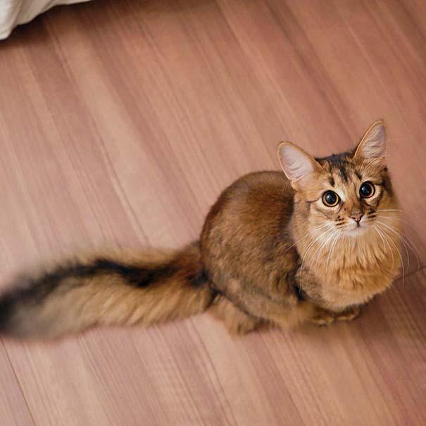 25+ από τις πιο όμορφες γάτες στον κόσμο (23)
