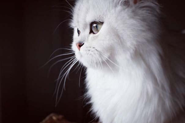 25+ από τις πιο όμορφες γάτες στον κόσμο (24)