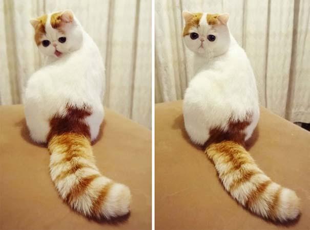 25+ από τις πιο όμορφες γάτες στον κόσμο (25)