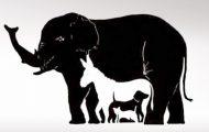 Τεστ παρατηρητικότητας: Πόσα ζώα μπορείτε να διακρίνετε σε αυτό το σκίτσο; (1)
