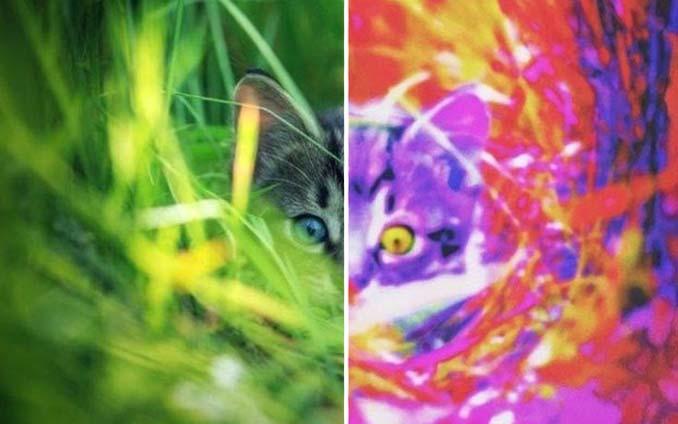 Πως βλέπουν τον κόσμο 12 διαφορετικά ζώα (1)