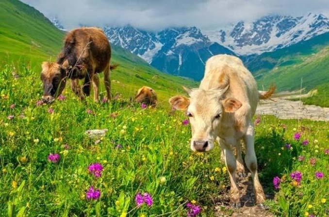 Πως βλέπουν τον κόσμο 12 διαφορετικά ζώα (12)