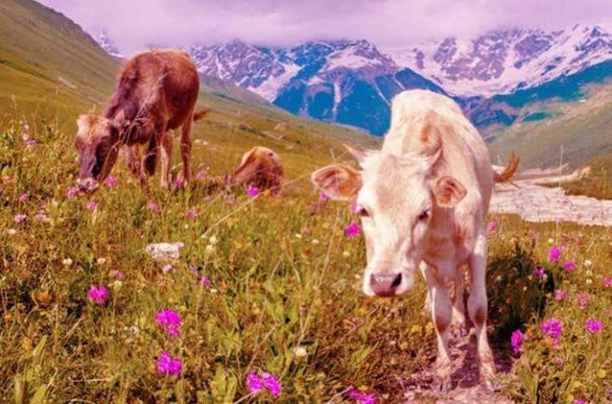 Πως βλέπουν τον κόσμο 12 διαφορετικά ζώα (13)
