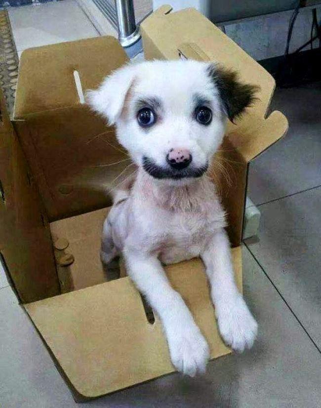 Σκύλοι με μοναδική γούνα (1)
