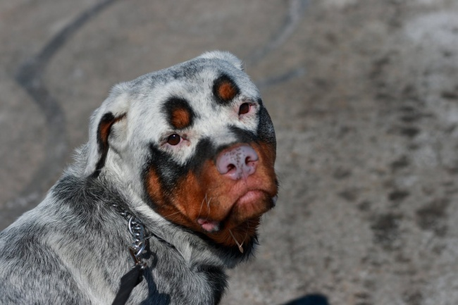Σκύλοι με μοναδική γούνα (2)
